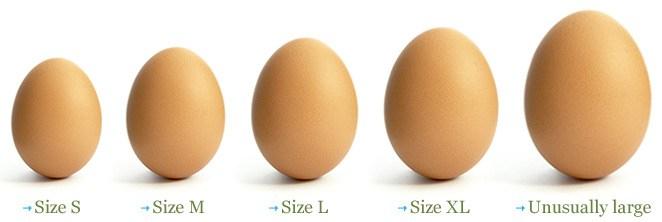 egg-matching.jpg